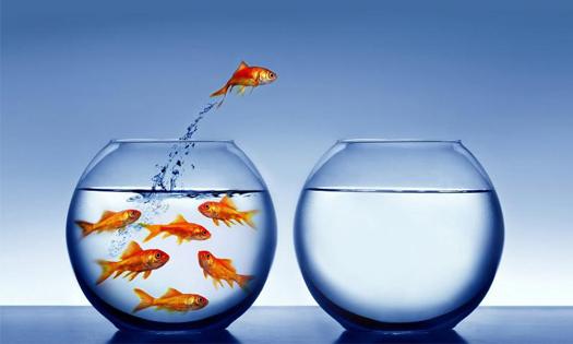 L' innovation managériale : facteur clé de succès